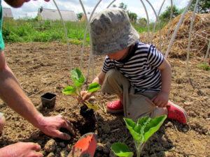 cest-le-moment-de-planter