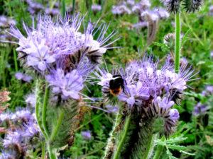 les-pollenisateurs-en-action